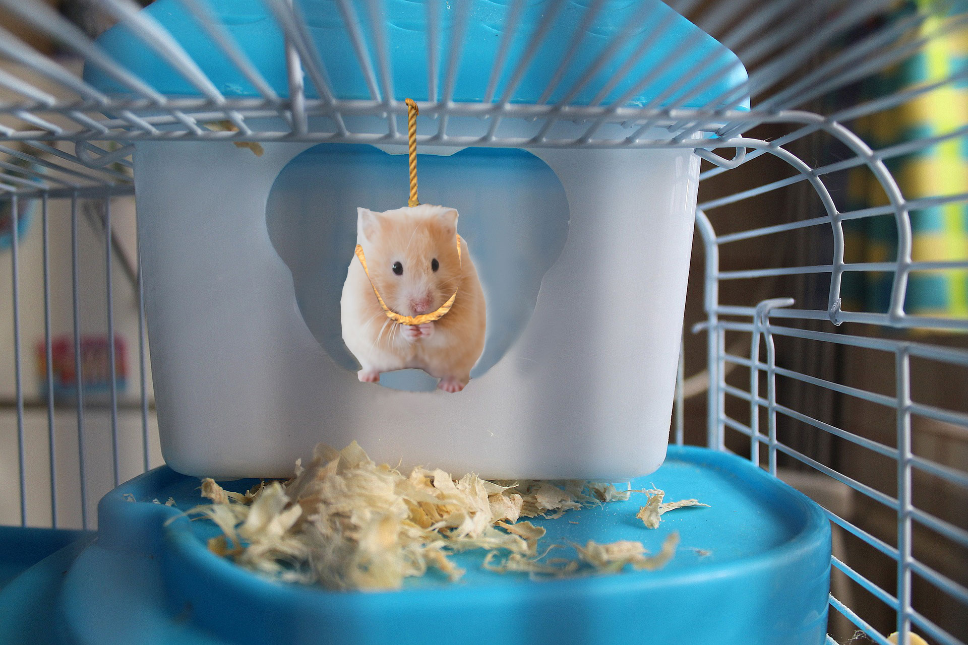 North West's Pet Hamster Found Dead After Being Stuck With Kim Kardashian for Two Hours