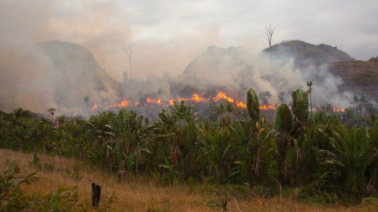 A tribe of 8-foot tall Amazonian Women who fled rainforest fires are terrifying Brazilians